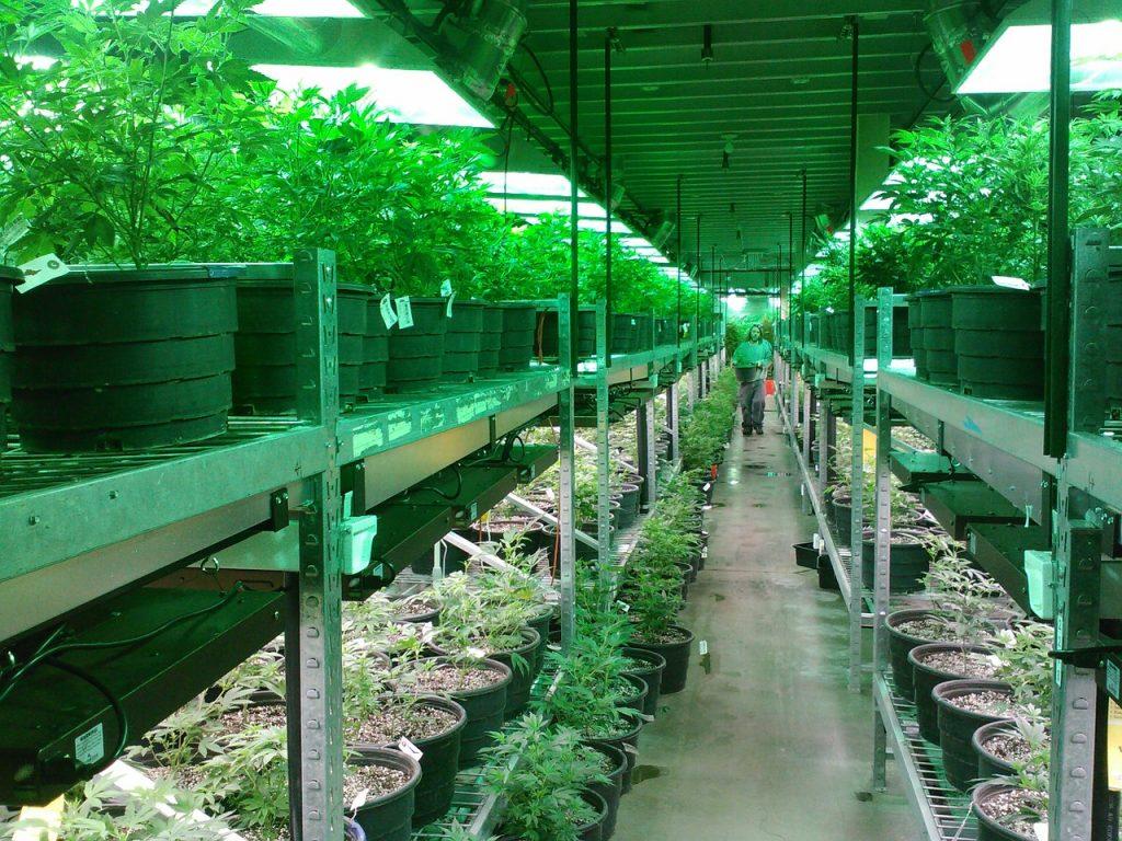 Avanza Cannabis Medicinal En Colombia Enfermedades Tratables Con Marihuana